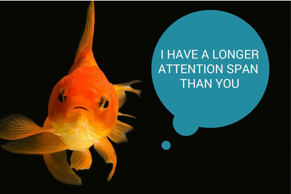 Goldfish Attn Span (1)